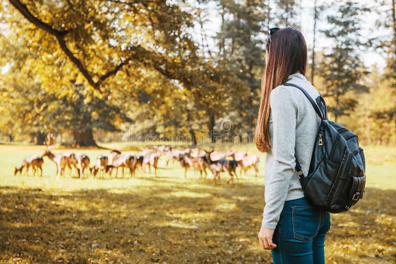 La touriste de fille regarde les cerfs communs frôlant dans la distance photo libre de droits