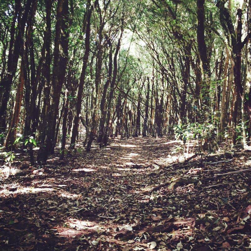 La traînée a appelé la forêt des elfes photos libres de droits