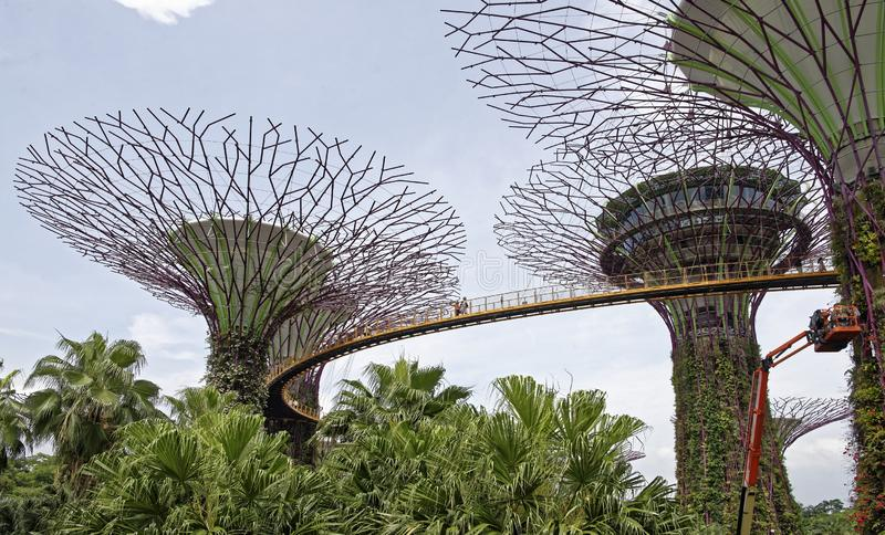 La traînée de ` du ` OCBC Skyway passe à une taille entre deux superbe-arbres Sur la traînée sont les touristes images libres de droits