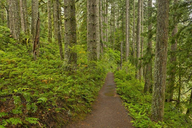 La traînée de forêt en argent tombe parc d'état photo stock