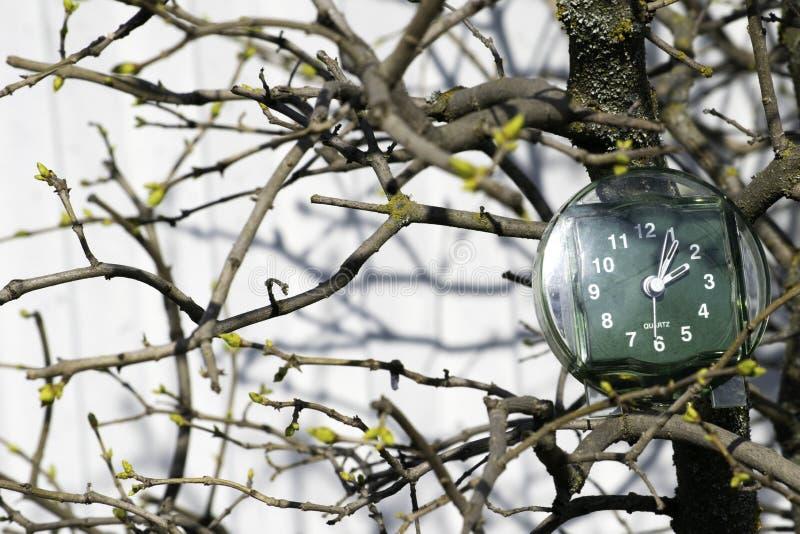 La transición al tiempo de verano, la llegada de la primavera, el reloj en el fondo de ramas con los brotes florecientes en un so imagenes de archivo