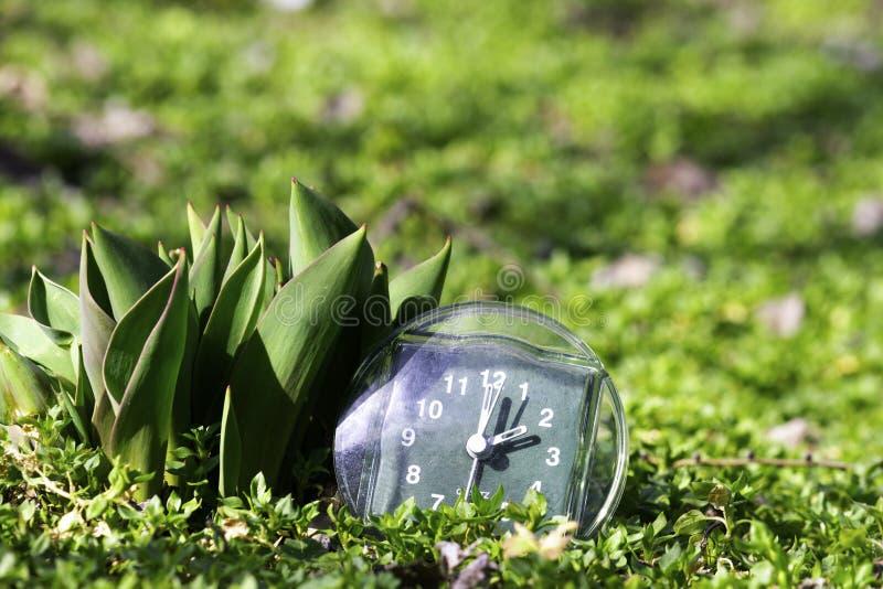 La transición al tiempo de verano, la llegada de la primavera, el reloj en la hierba verde de la primavera al lado de la flor no  foto de archivo