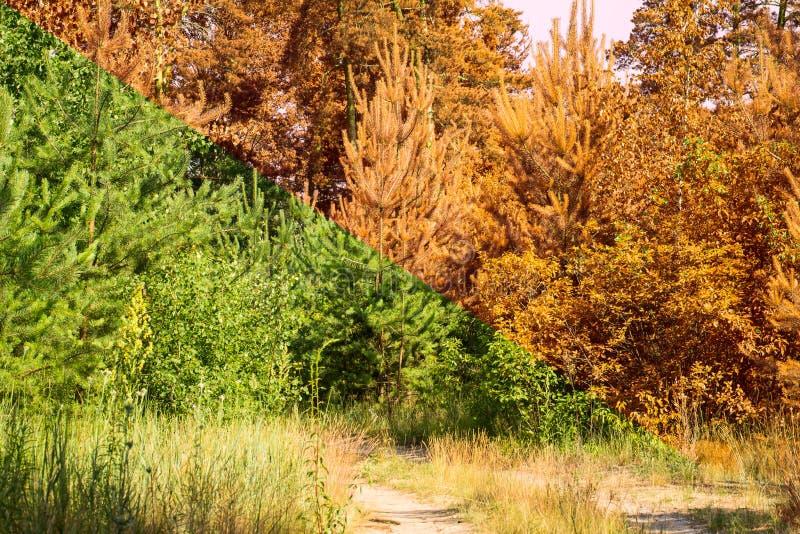 La transición de la estación de verano en las plantas verdes del otoño llega a ser anaranjada foto de archivo libre de regalías