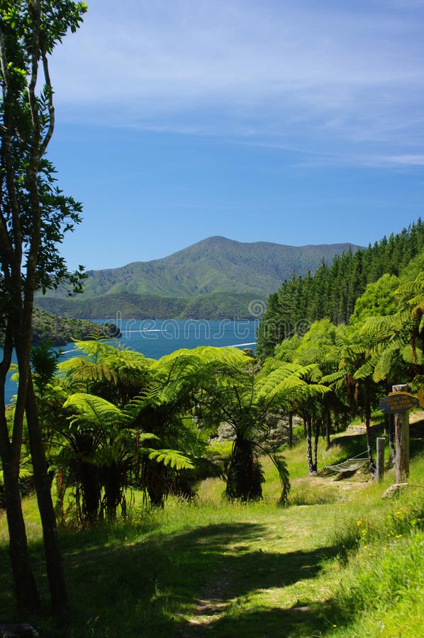 La trayectoria de Fern Tree en Marlborough suena Nueva Zelanda imagenes de archivo