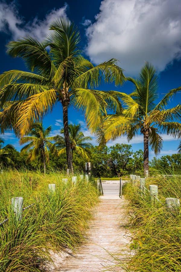 La trayectoria a la playa y las palmeras en Smathers varan, Key West, la Florida fotografía de archivo