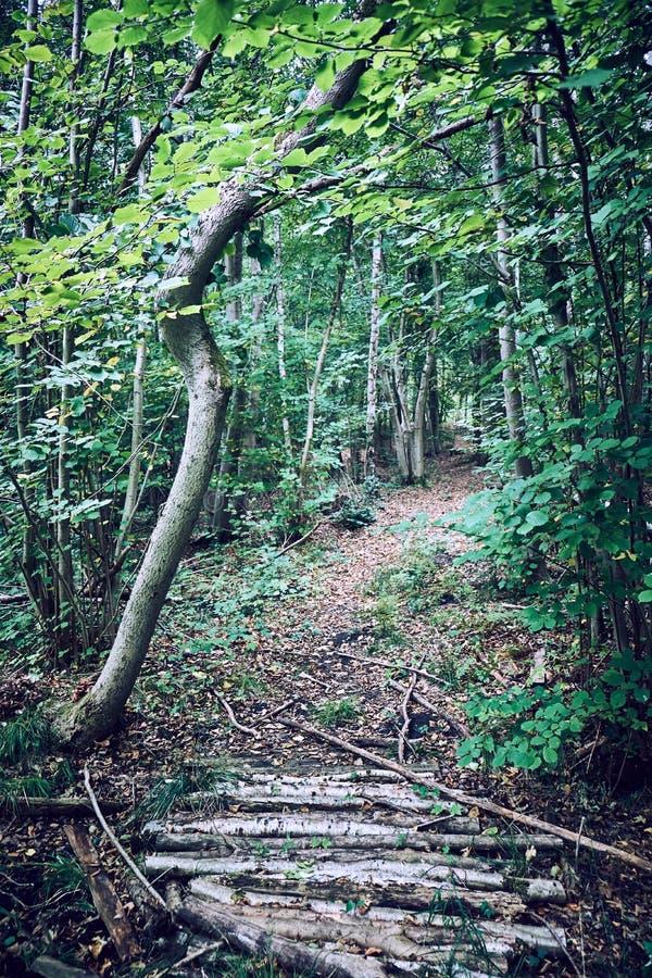 La trayectoria overgrown en un bosque cubierto en marrón se va con los árboles todavía que son cubiertos en tonos verdes imágenes de archivo libres de regalías