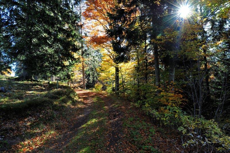 La trayectoria que caminaba preciosa llamó el ` de Ibacher Panoramaweg del ` cerca de Oberibach que mostraba el paisaje colorido  fotografía de archivo