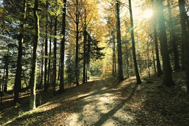La trayectoria que caminaba preciosa llamó el ` de Ibacher Panoramaweg del ` cerca de Oberibach que mostraba el paisaje colorido  imagen de archivo libre de regalías