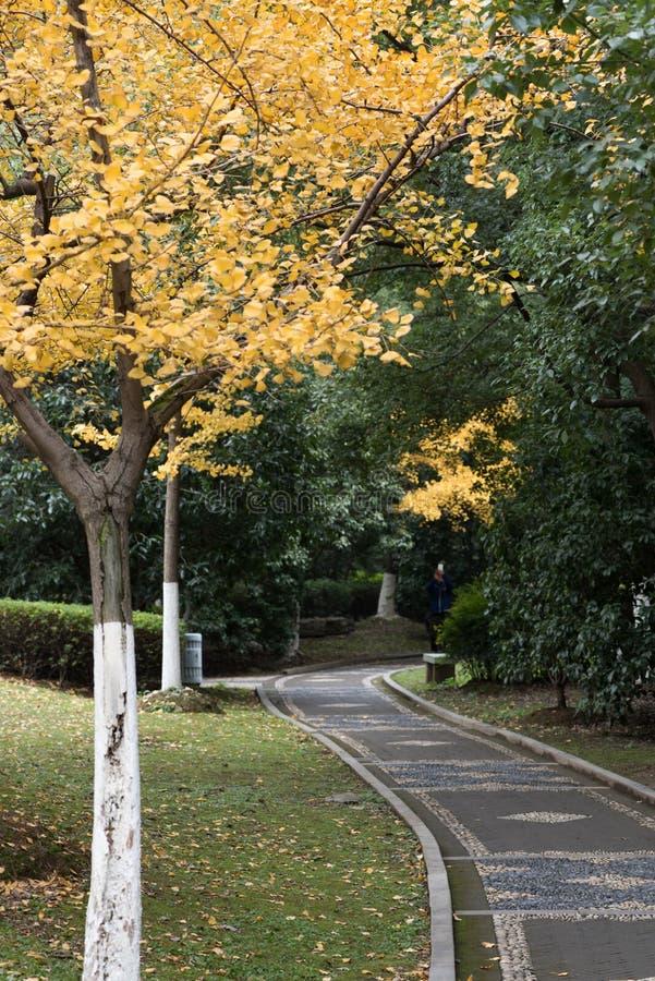 La trayectoria reservada en el parque del otoño fotos de archivo