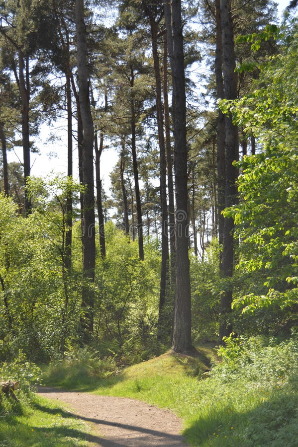 La trayectoria a través del bosque imágenes de archivo libres de regalías