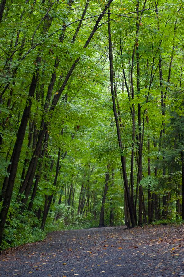 La trayectoria verde a las caídas de Taughannock fotos de archivo libres de regalías