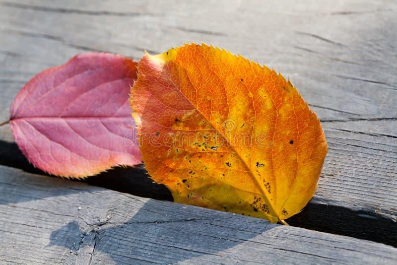 La tremula di autunno va al sole su un fondo di legno Fuoco molle fotografia stock libera da diritti
