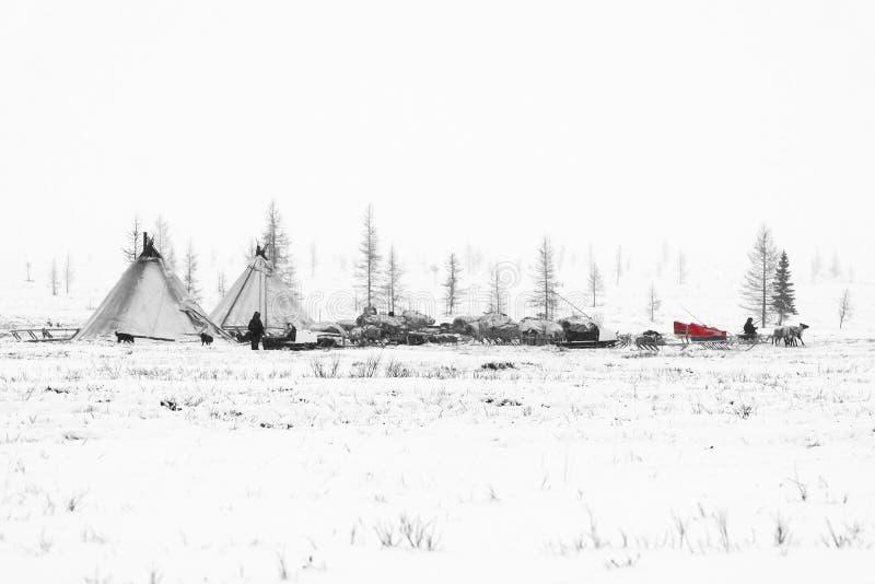 La tribu nomade dispose à assaisonner la migration dans la toundra polaire à un jour givré photographie stock