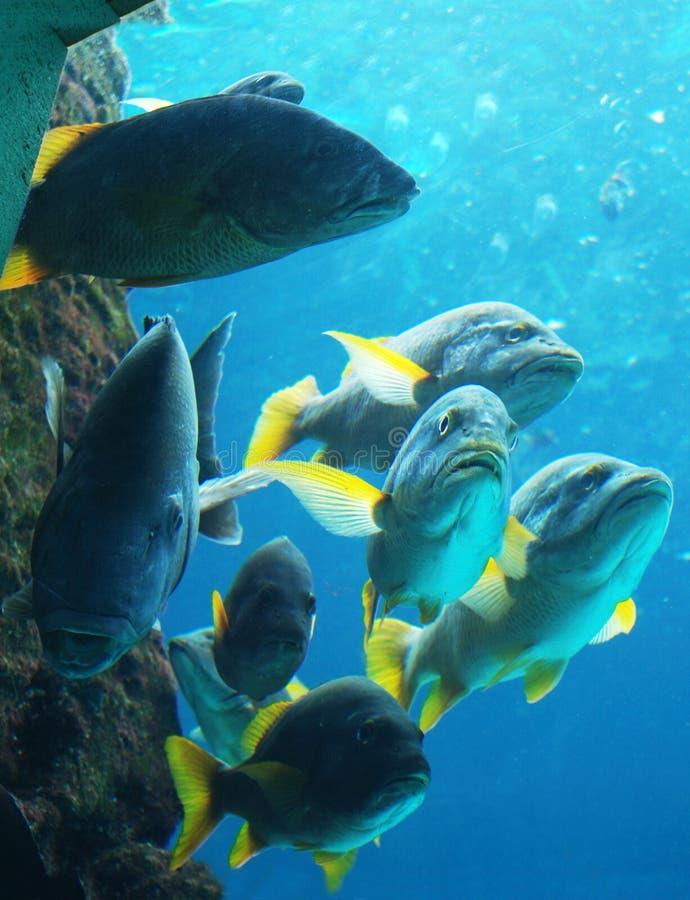 La troupe de poissons photographie stock