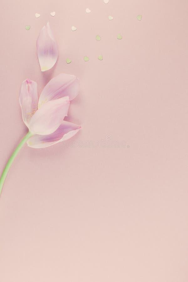 La tulipe rose avec le coeur d'or arrose la configuration d'appartement images stock