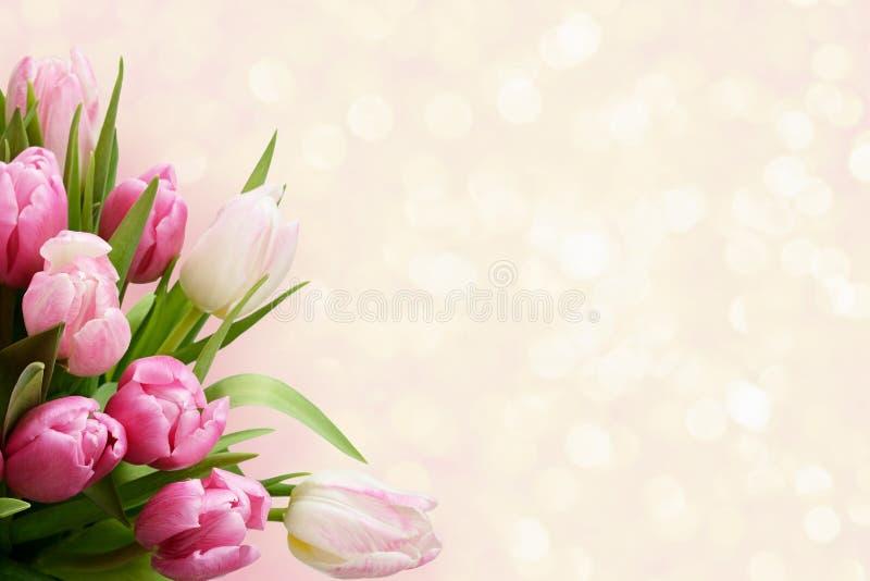 La tulipe rose fleurit le coin image libre de droits