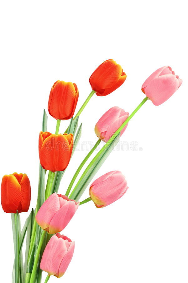 La tulipe soit le bouquet photos libres de droits