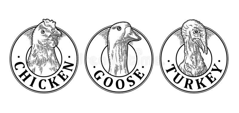 La Turchia, il pollo e l'oca si dirigono con iscrizione Incisione d'annata di vettore illustrazione vettoriale