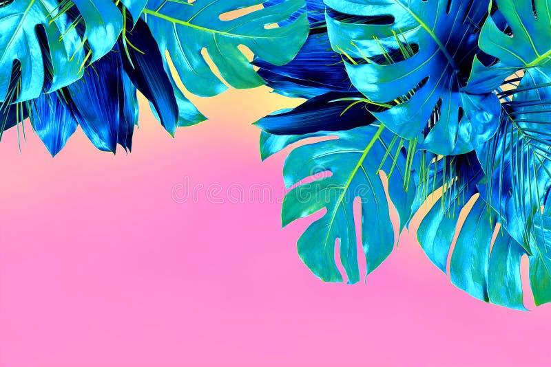 La turquesa coloreó cerca para arriba de diversas hojas tropicales frescas en backgroun rosado fotografía de archivo