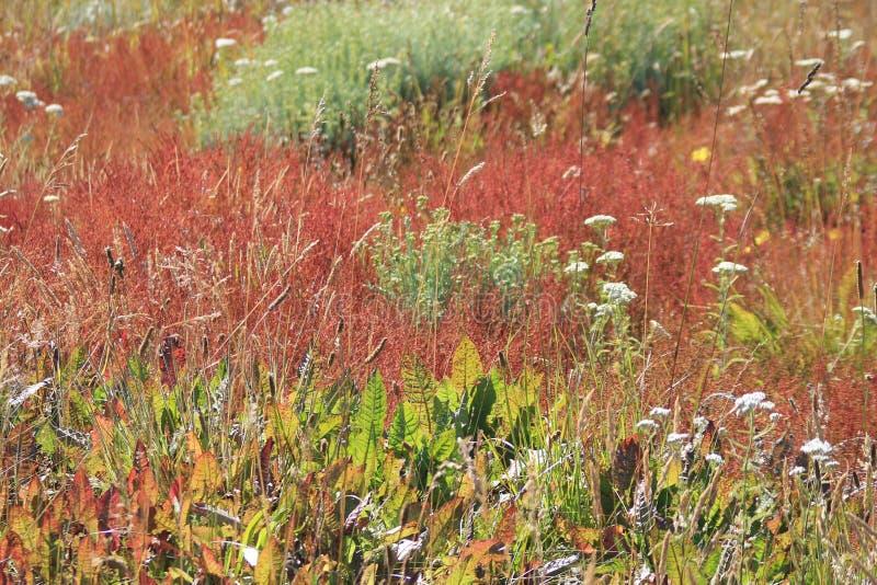 La végétation de prairie chalten photos stock