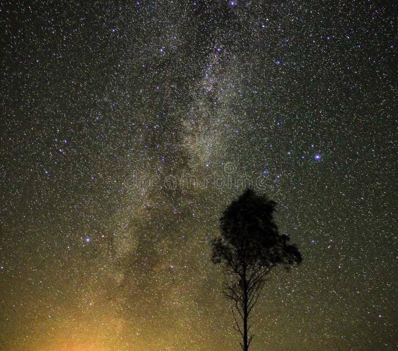 La vía láctea protagoniza observación de la constelación del Cygnus y de Lyra imágenes de archivo libres de regalías