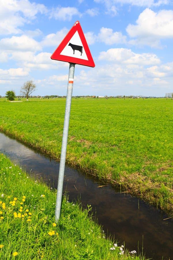 La vaca peligro señal adentro un paisaje holandés foto de archivo libre de regalías