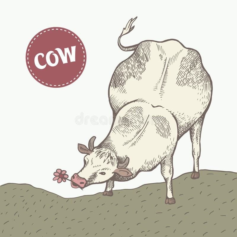 La vache mange l'herbe illustration stock