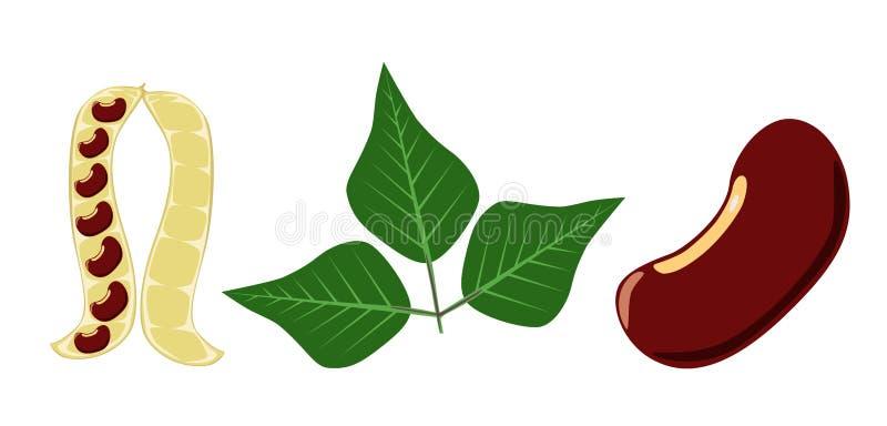 La vaina de guisante de las habas rojas y la haba roja hojean en el blanco - vector stock de ilustración