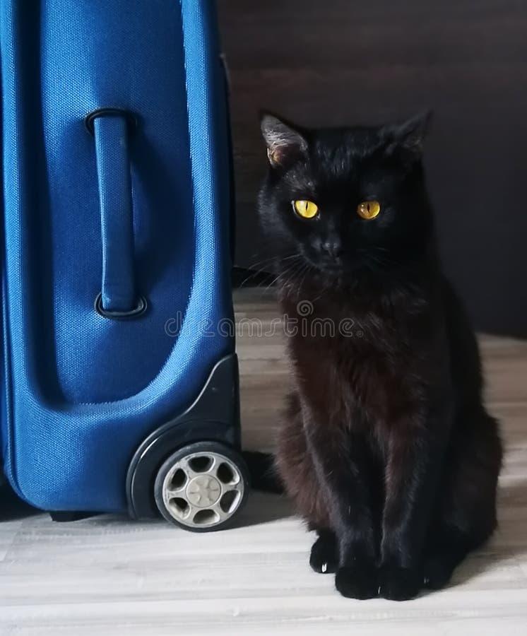 La valise du propriétaire rassemblée sur les vacances et le chat est dissatisfaite images stock