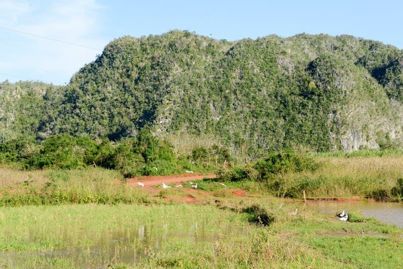La vallée de Vinales sur le Cuba photo stock