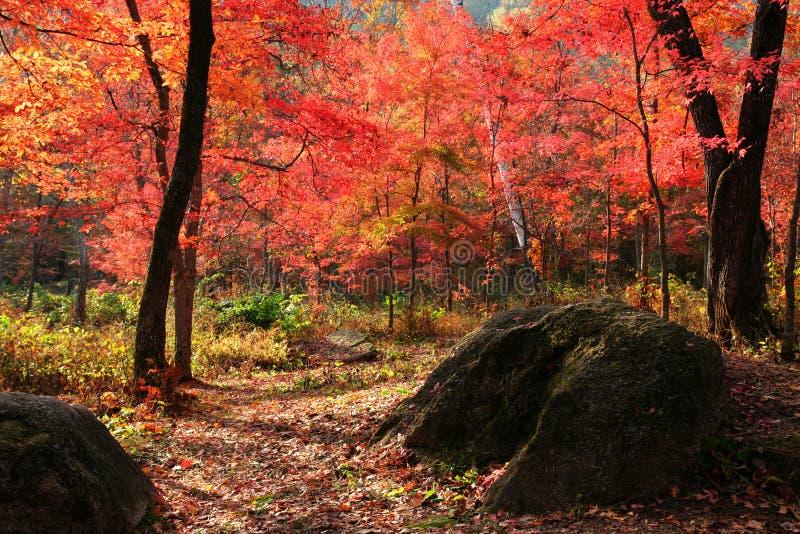 La vallée des lames automnales rouges images stock