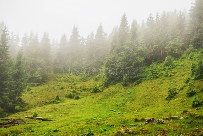 La valle della montagna della nuvola e della nebbia abbellisce, carpatico, Ucraina immagini stock