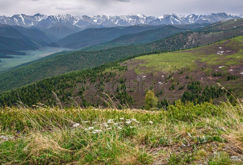 La valle delle montagne fiorisce la neve della foresta fotografie stock