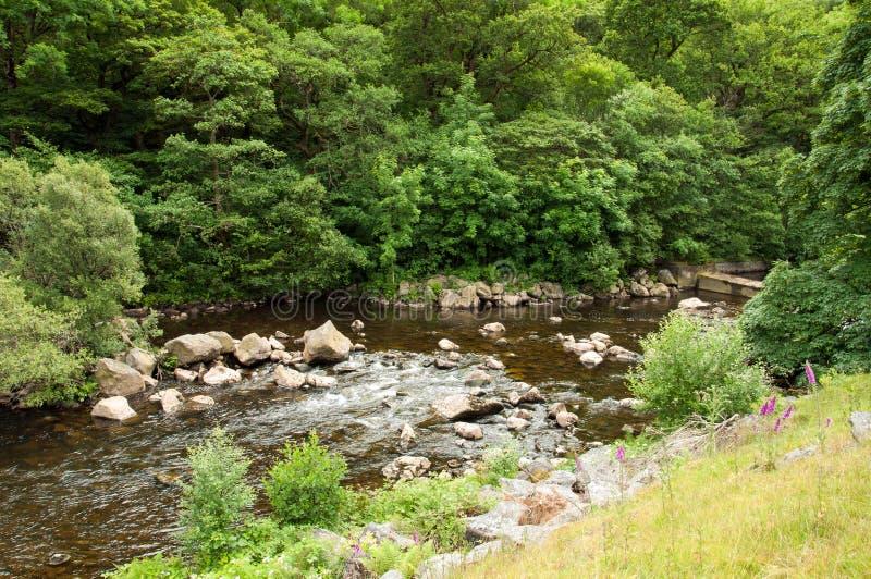 La valle di slancio nel summetime di Galles, Regno Unito immagini stock libere da diritti