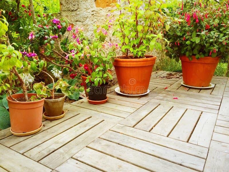La variedad de flores y las plantas en verano cultivan un huerto fotografía de archivo