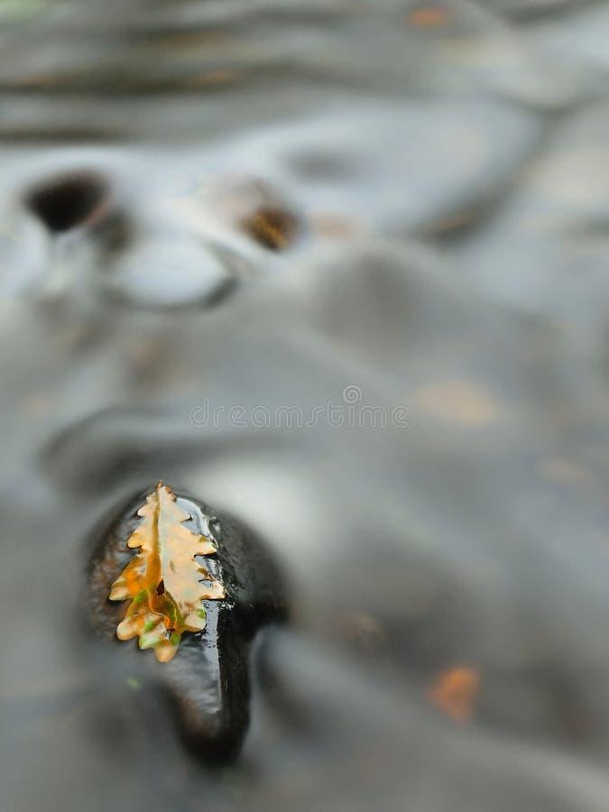 La vecchia foglia marcia gialla della quercia sulla pietra del basalto nel freddo ha offuscato l'acqua del fiume della montagna fotografia stock libera da diritti
