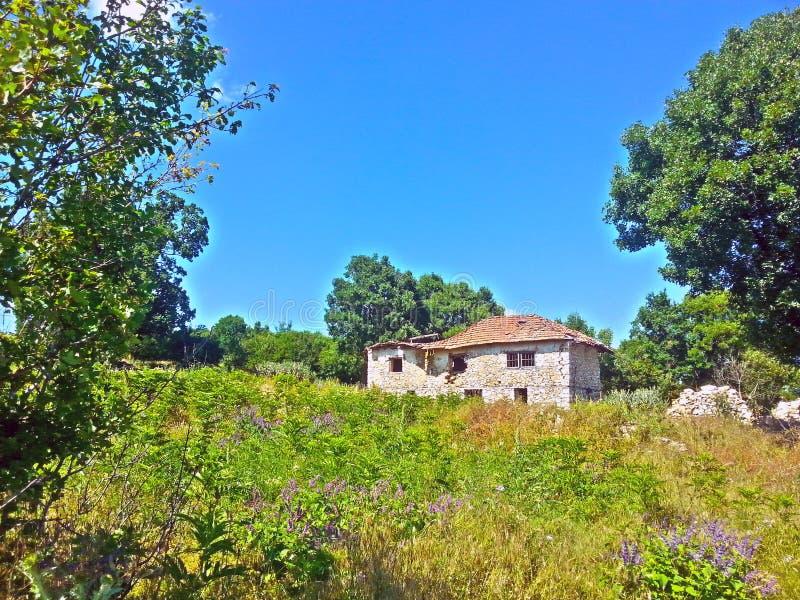la vecchia natura della casa si appanna l'erba verde della foresta di legni immagini stock libere da diritti