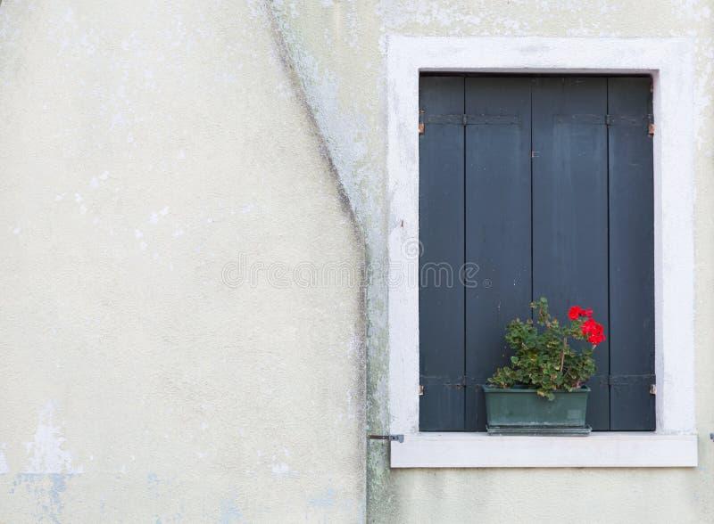 La ventana shutters cerrado y la flor en la pared blanca imagenes de archivo