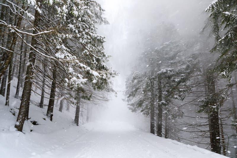 La ventisca en bosque imagenes de archivo