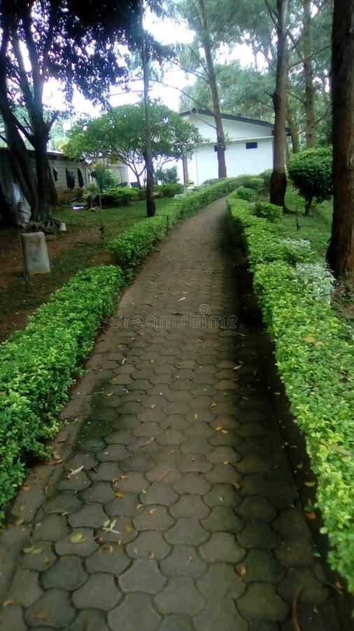 La verdure vraie du Cameroun en Afrique photos stock