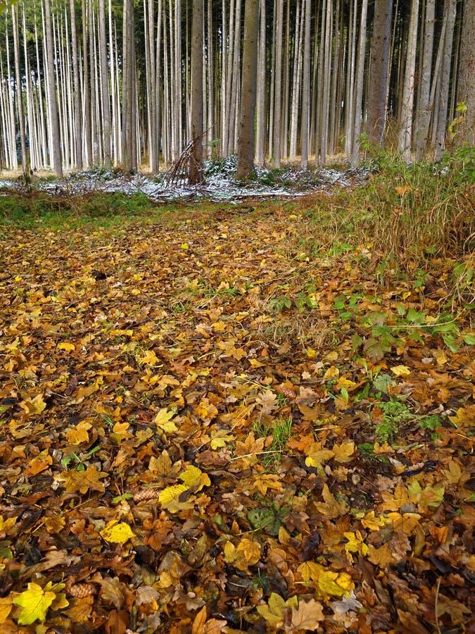 La vertiente se va mojado en piso del bosque en la caída fotografía de archivo
