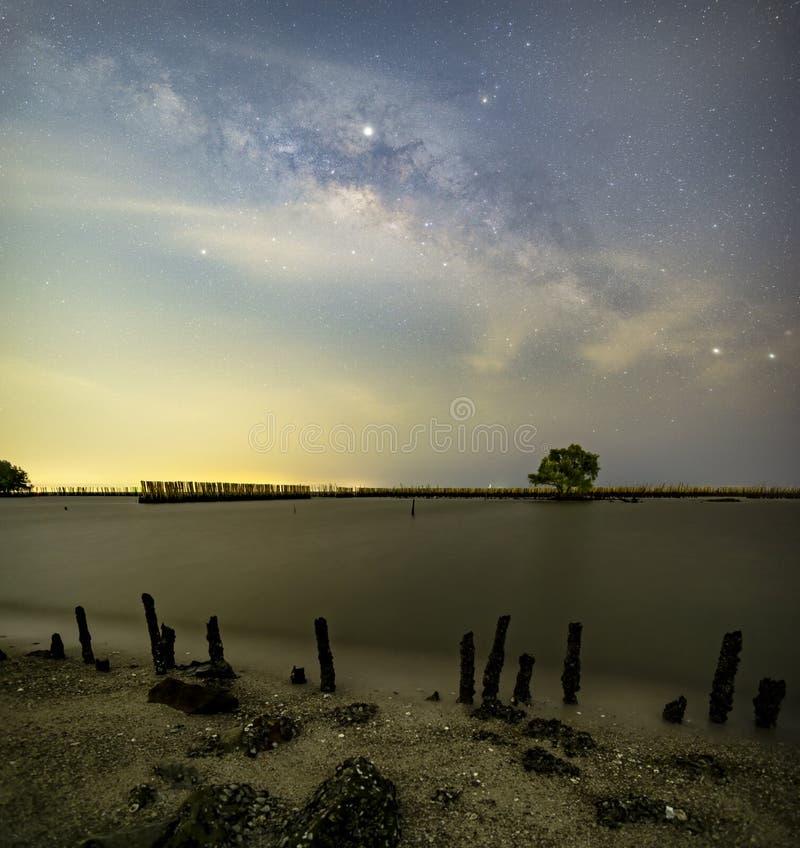 La Via Lattea sopra un singolo albero ed il paesaggio di bambù impedisce il mare la rottura della costa fotografia stock libera da diritti