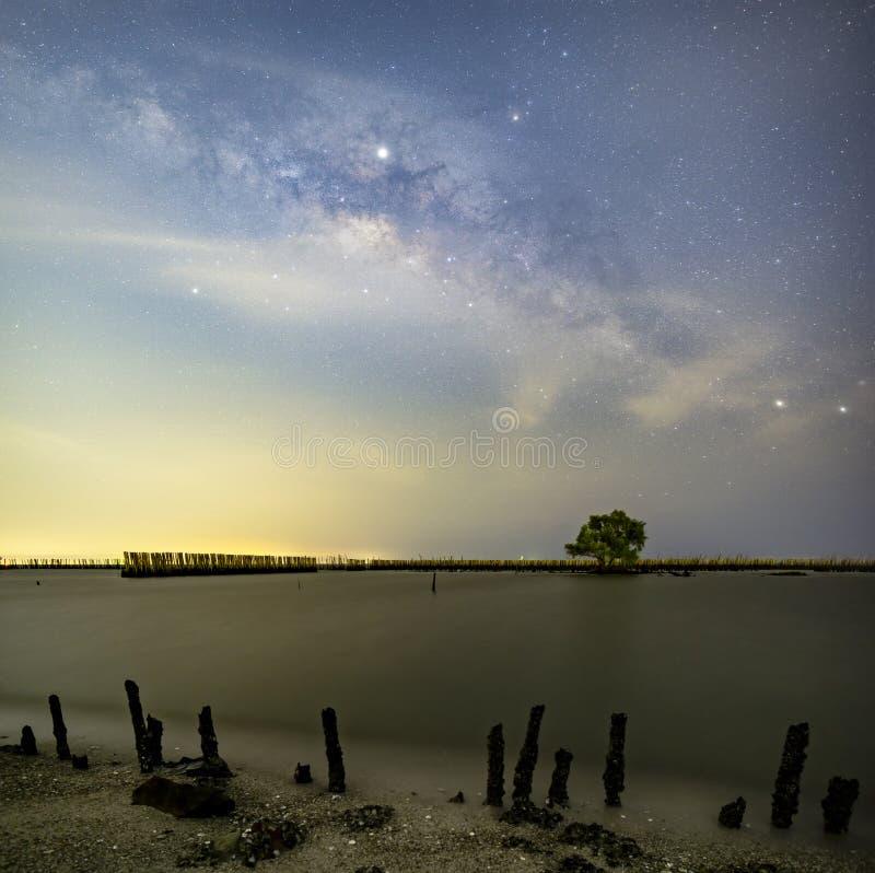 La Via Lattea sopra un singolo albero ed il paesaggio di bamb? impedisce il mare la rottura della costa fotografia stock libera da diritti