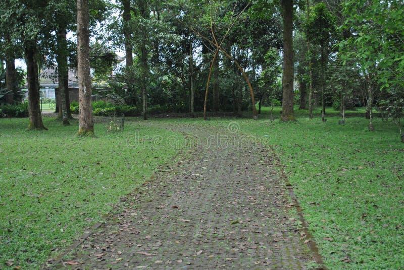 La via nel giardino botanico di Bedugul Bali fotografia stock libera da diritti