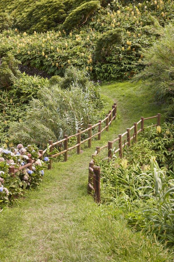 La via verde sorrounded da vegetazione fertile in Flores, Azzorre è immagine stock libera da diritti