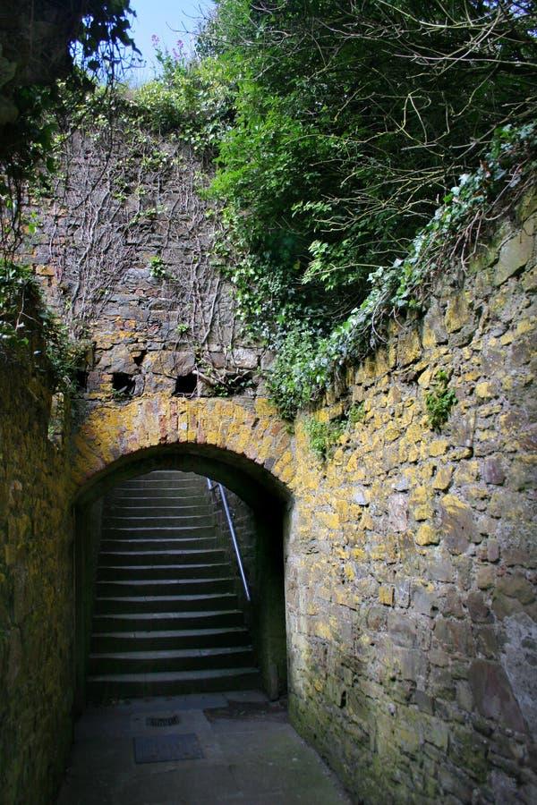 La vid cubrió la escalera Irlanda foto de archivo
