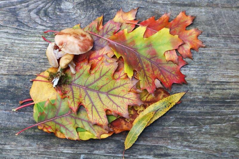 La vida de la calma del otoño con las setas del leavesand del arce encendido envejeció de madera imagenes de archivo