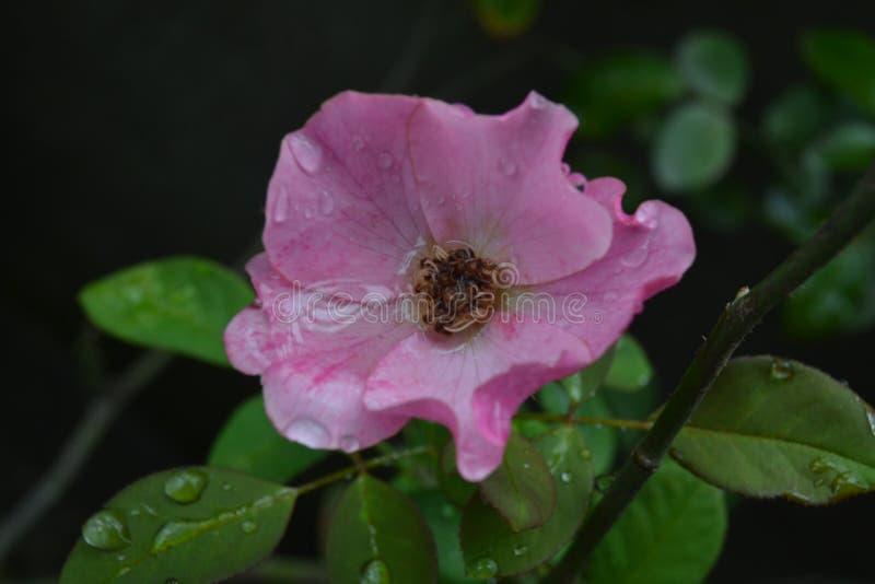La vida de la flor, mi flor foto de archivo libre de regalías