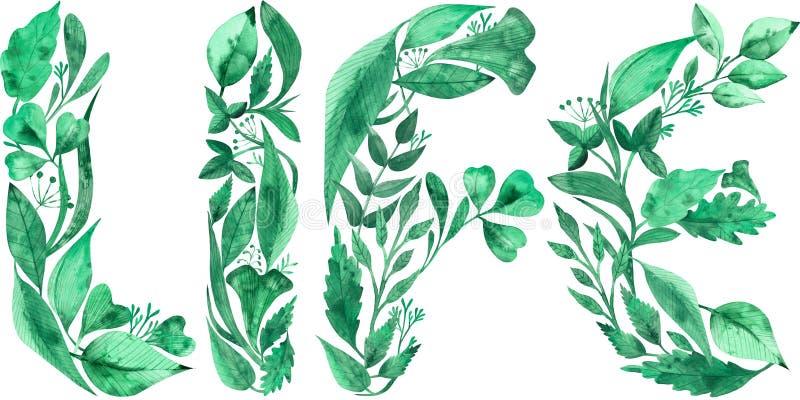 La VIDA de la palabra hizo de las hojas verdes aisladas en el fondo blanco Ilustraci?n de la acuarela stock de ilustración