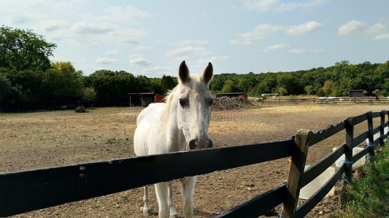 La vida de un caballo imagen de archivo libre de regalías